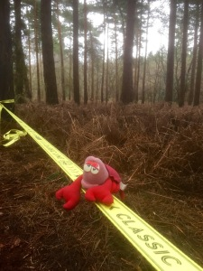 Lobster demonstrating how to walk a slackline in Bacton Woods