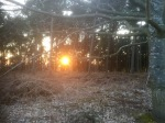 Sun setting through the pines