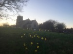 Daffodils and church in Ringland