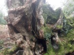 Faerie kingdoms hidden in gnarled trunks