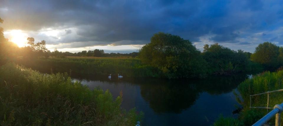 Swans and cygnet under threatening skies