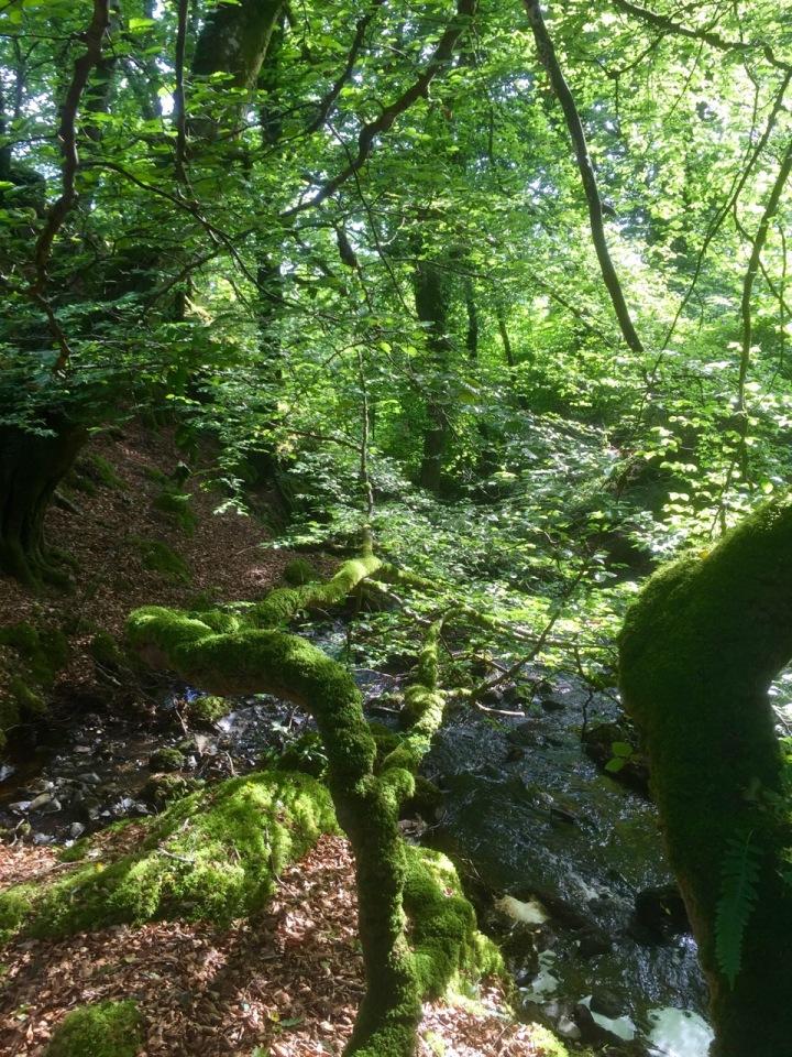 Stream down to the loch