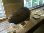 Wooden beaver - only one I could find