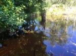 Lake created by beaver dam
