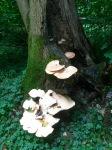 Fungus faerie kingdom?
