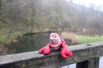 Travelling Lobster on a bridge near Ilam's Rock