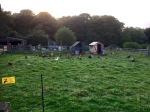 Campsite chickens