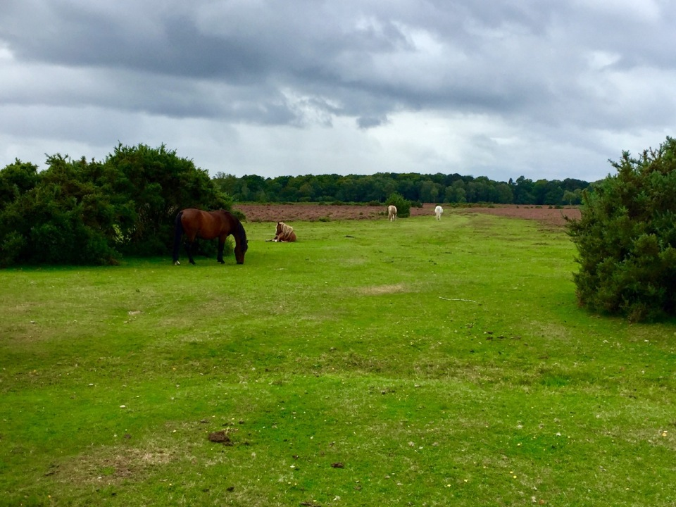New Forest - ponies abound