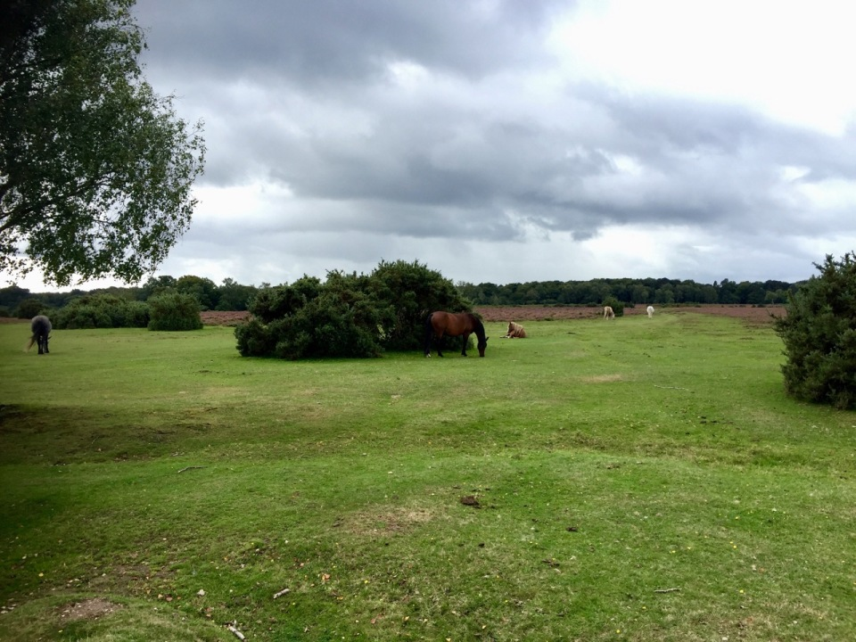 New Forest - more ponies