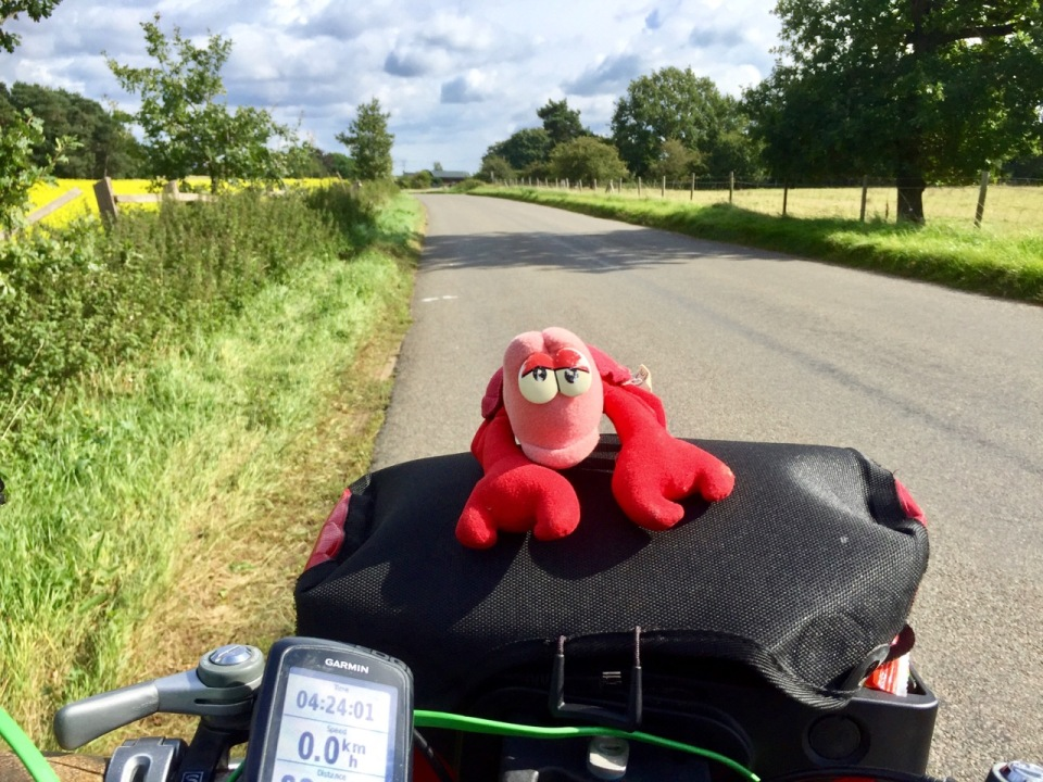 Pedalling through Thetford Forest - Lobster helping