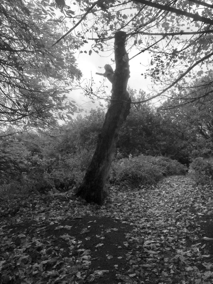 Dead tree - was it struck by lightning?