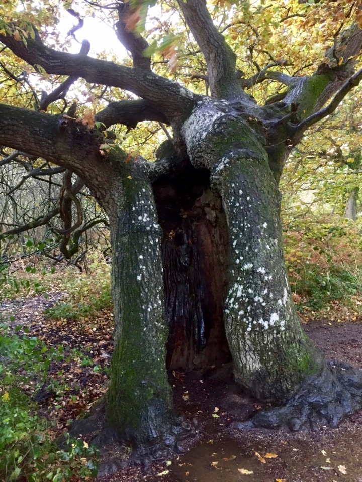 Old oak, doorway to another world?