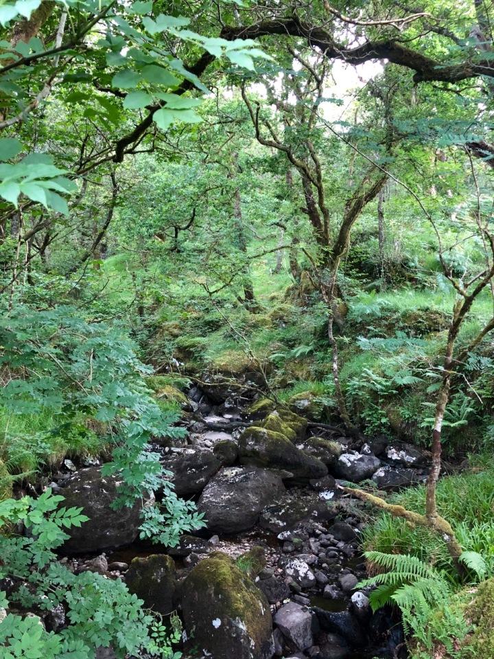 Passing through woods cross-crossed by streams