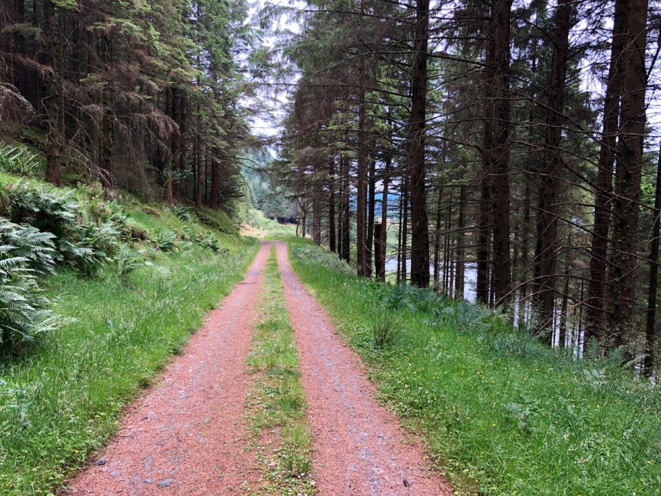 Trail on the west side of Loch Eck