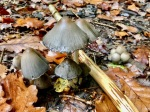 Autumn shrooms in abundance