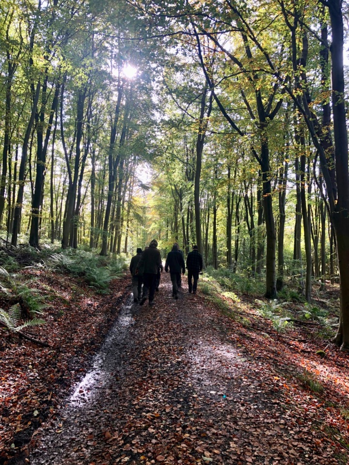 Woodland wanderings with the group