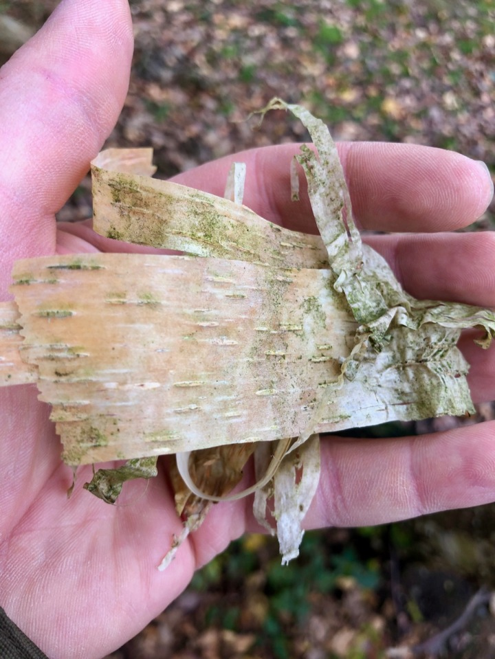 Birch bark - the Betulin it contains means it lights easily