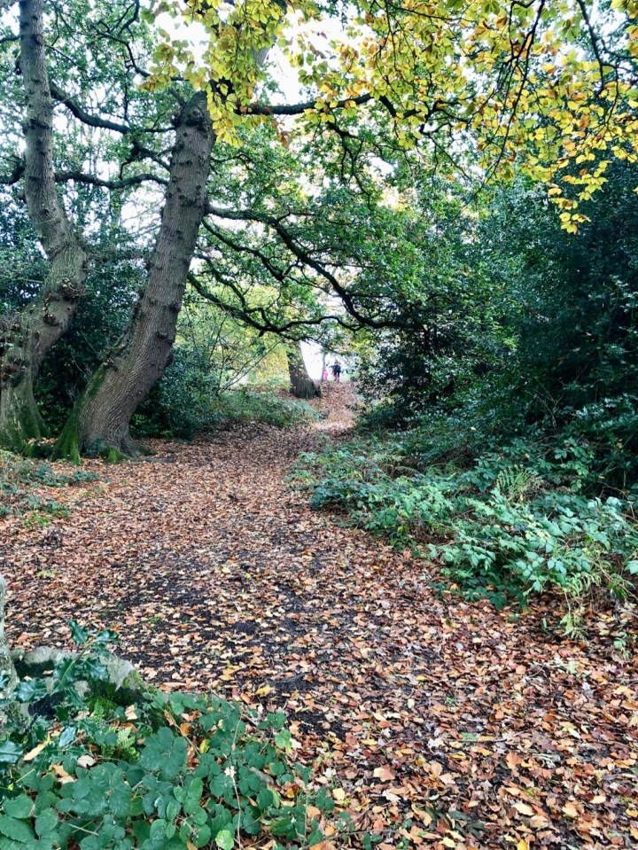 Cosy woodland paths