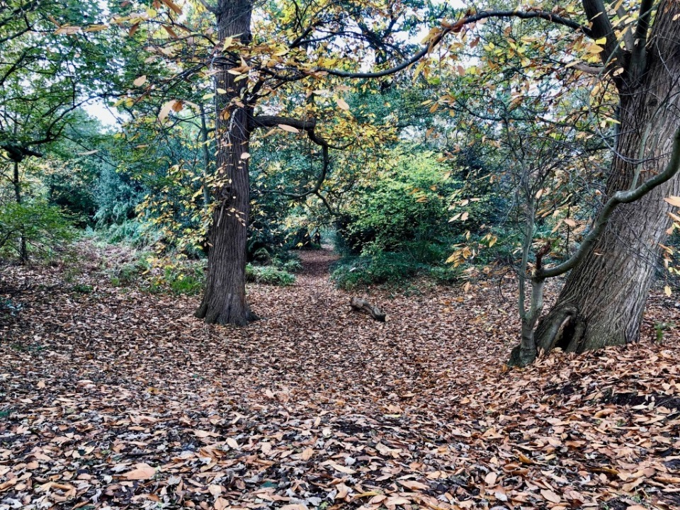 Old Chestnut grove