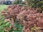 Lots of dead bracken about