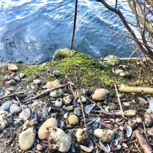 I think Otters use this as a feeding spot - fresh water mussel shells