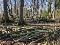 Coppicing done - habitat piles made