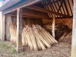 Thatching reeds