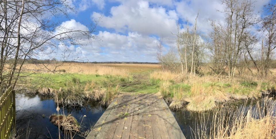 Broads marshland