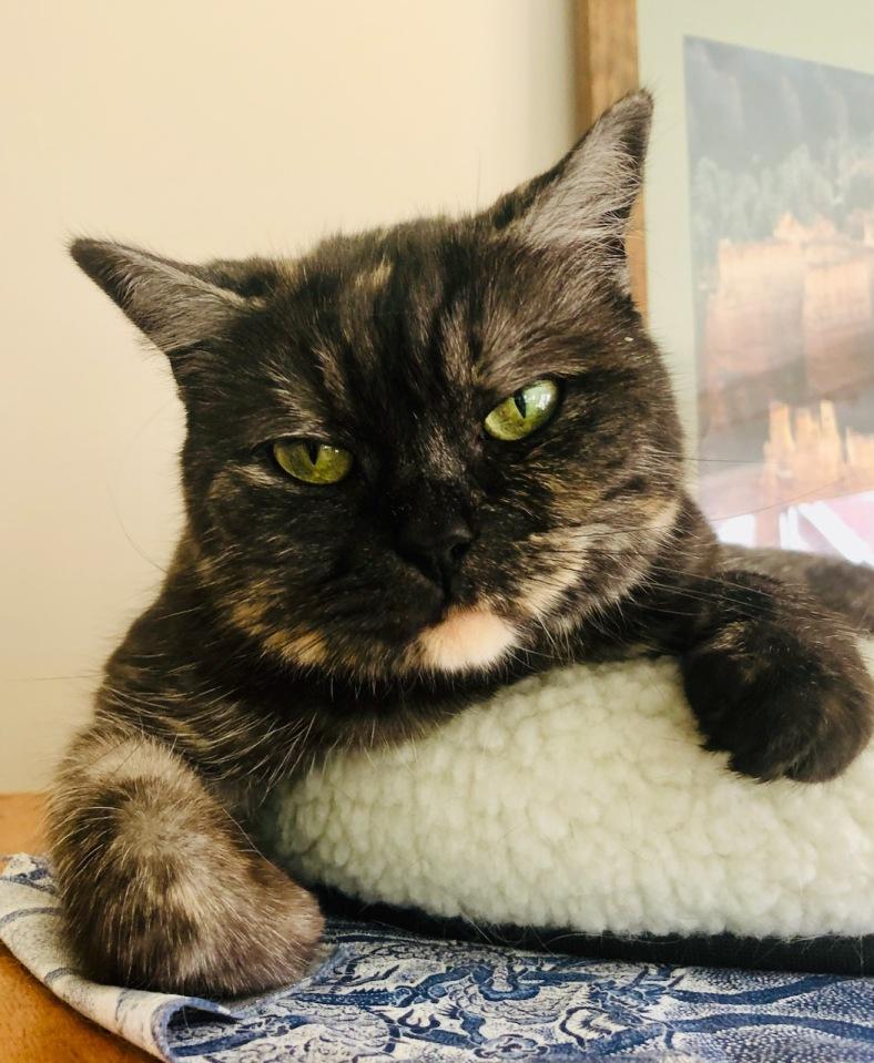 Cat 2 - looking disdainful