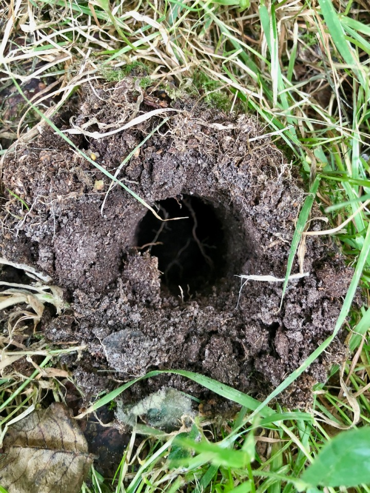 Who would live in a hole like this?